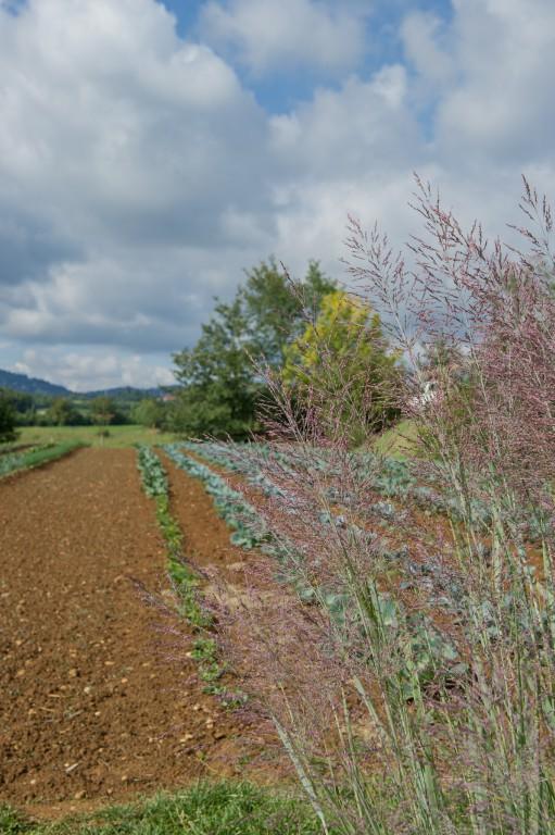 Florario - Il Giardino (10)