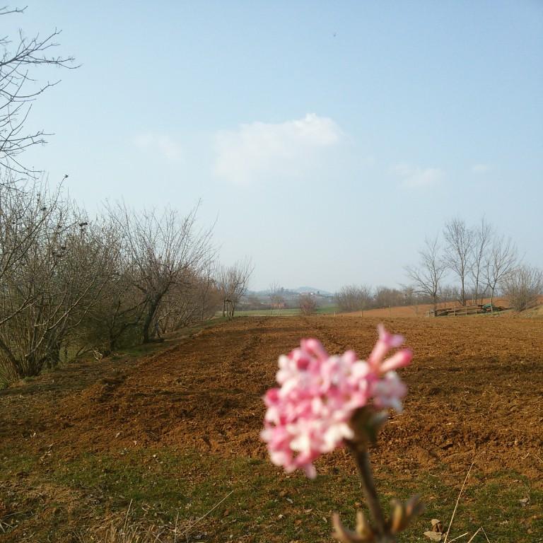 Florario - Il Giardino (23)