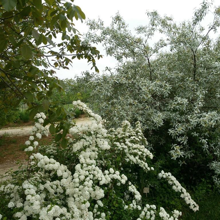 Florario - Il Giardino (26)