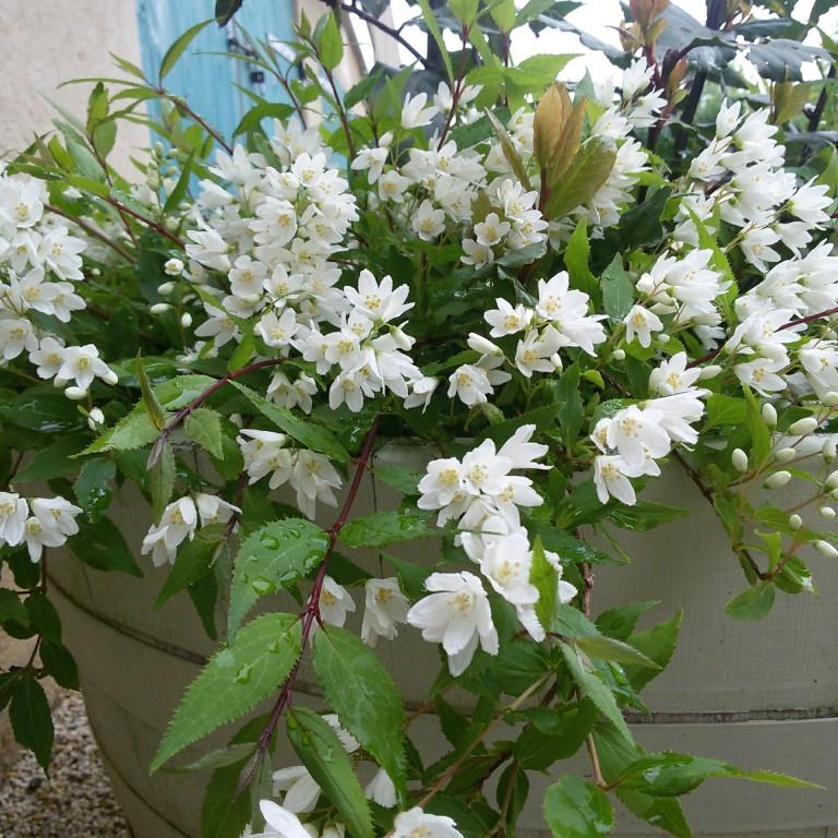 Florario - Il Giardino (28)