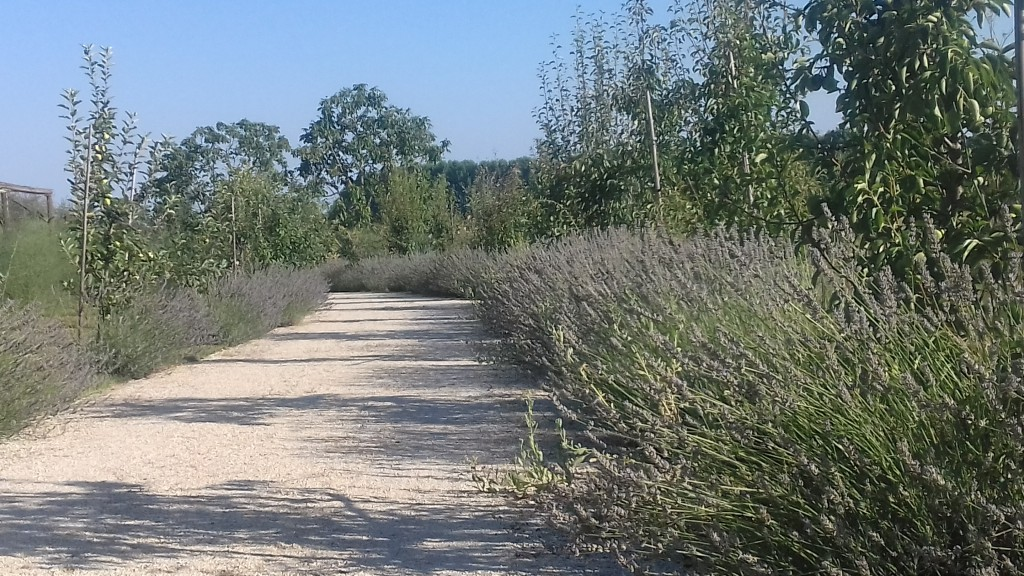 Florario - Il Giardino (3)
