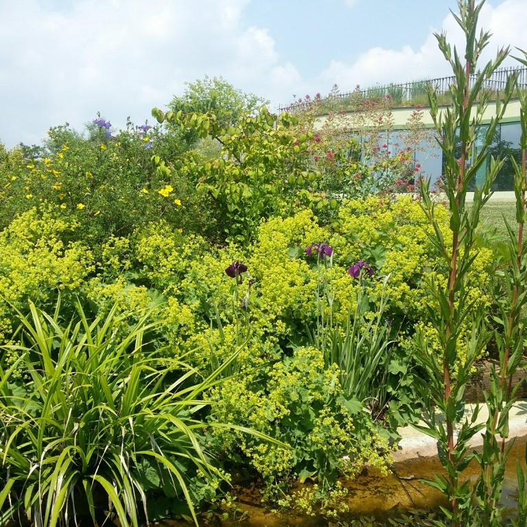 Florario - Il Giardino (31)