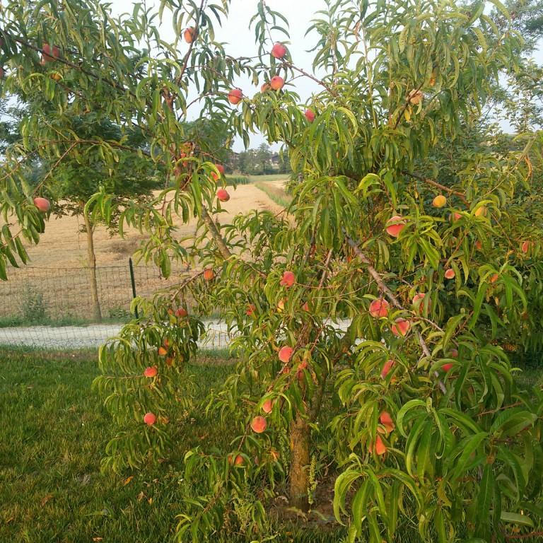 Florario - Il Giardino (35)