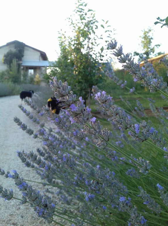 Florario - Il Giardino (48)
