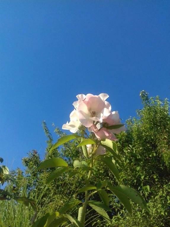 Florario - Il Giardino (49)