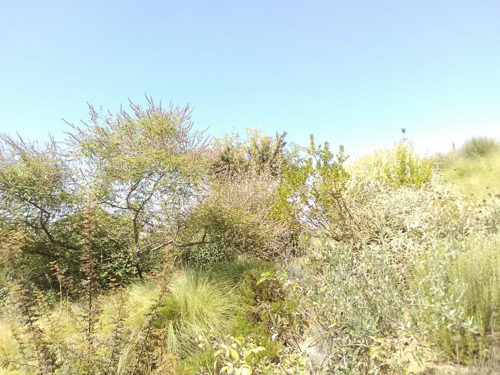 Florario - Il Giardino (55)