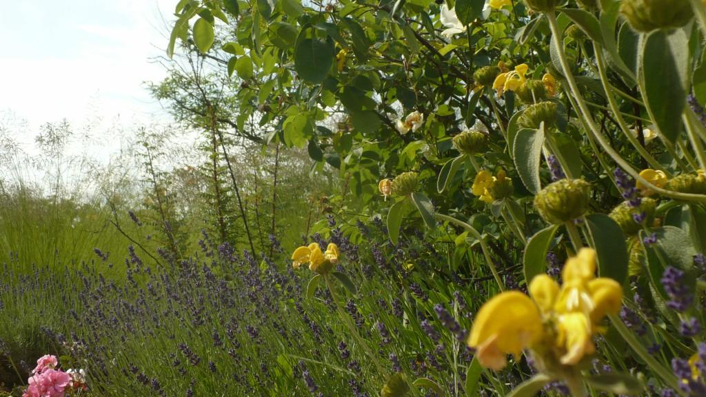 Florario - Il Giardino (64)