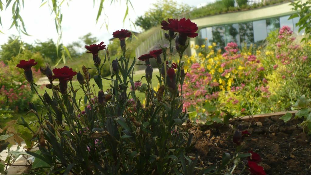Florario - Il Giardino (66)