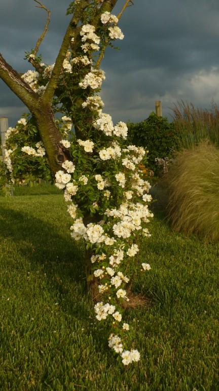 Florario - Il Giardino (68)